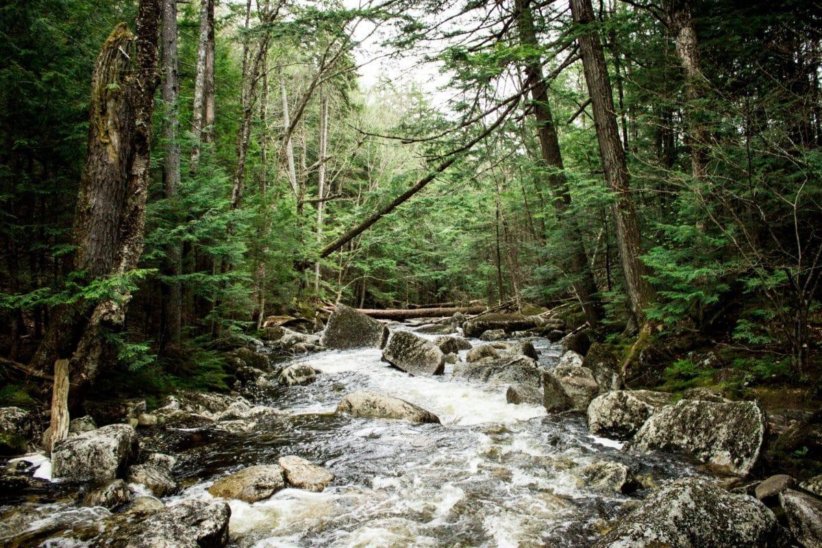 струмок, Лишайник, краєвид, дерево, струмок, річка, природа, вода