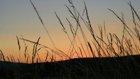 трава, тень, поле, небо, солнце, Рассвет, закат, природа, пейзаж
