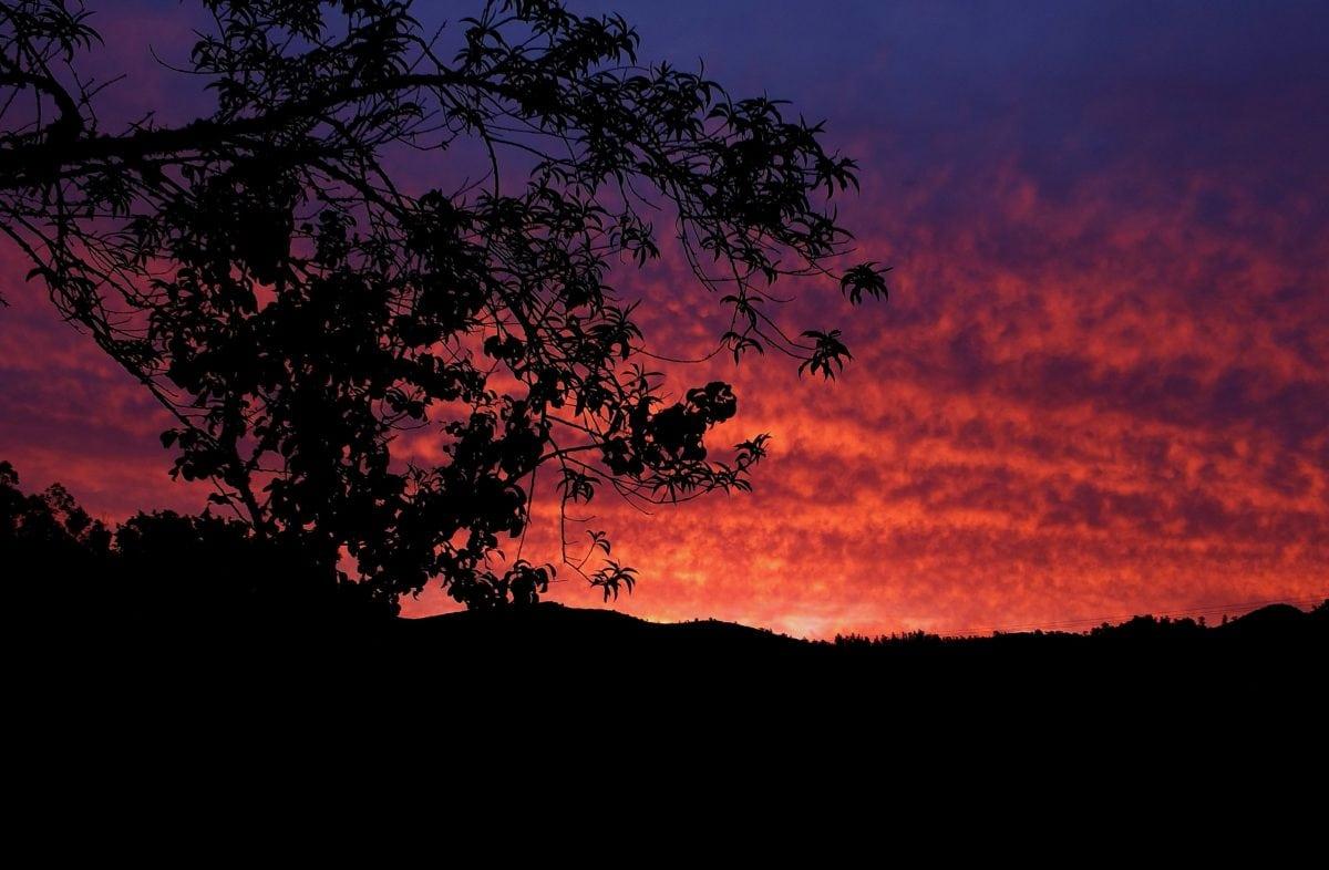 Mor gökyüzü, günbatımı, siluet, ağaç, peyzaj, alacakaranlıkta, arkadan aydınlatmalı, Dawn, gece