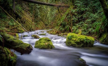 water, creek, river, wood, moss, stream, landscape, forest, outdoor