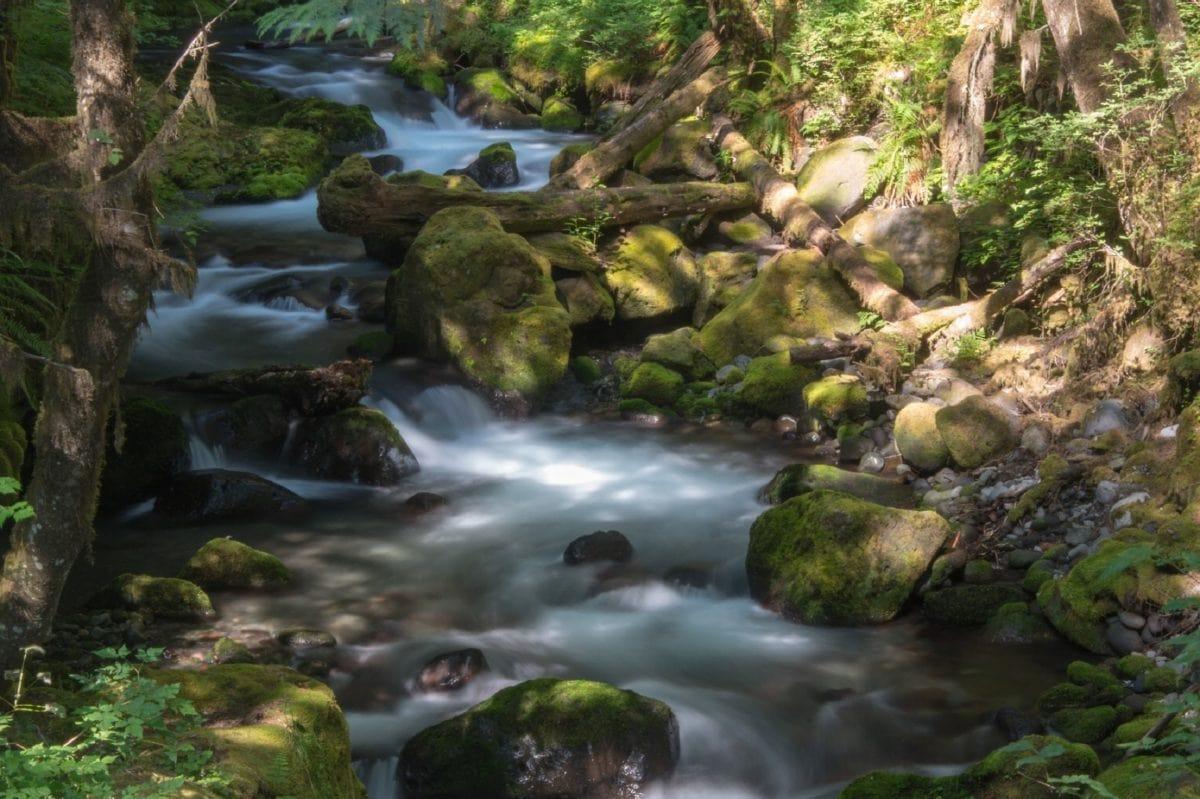 stream, moss, nature, creek, water, wood, waterfall, river, stone