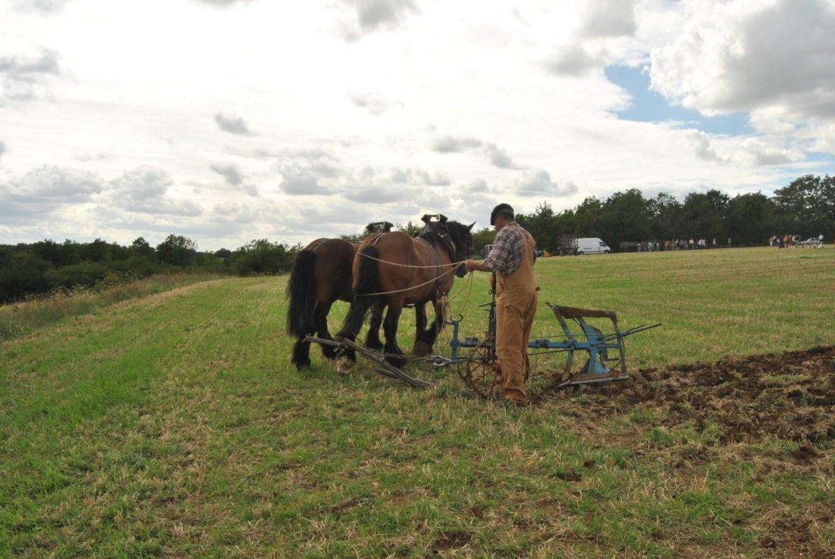 agricoltura, campo, Cavalleria, cavallo, attrezzo, uomo, lavoro, erba, Ranch, all'aperto