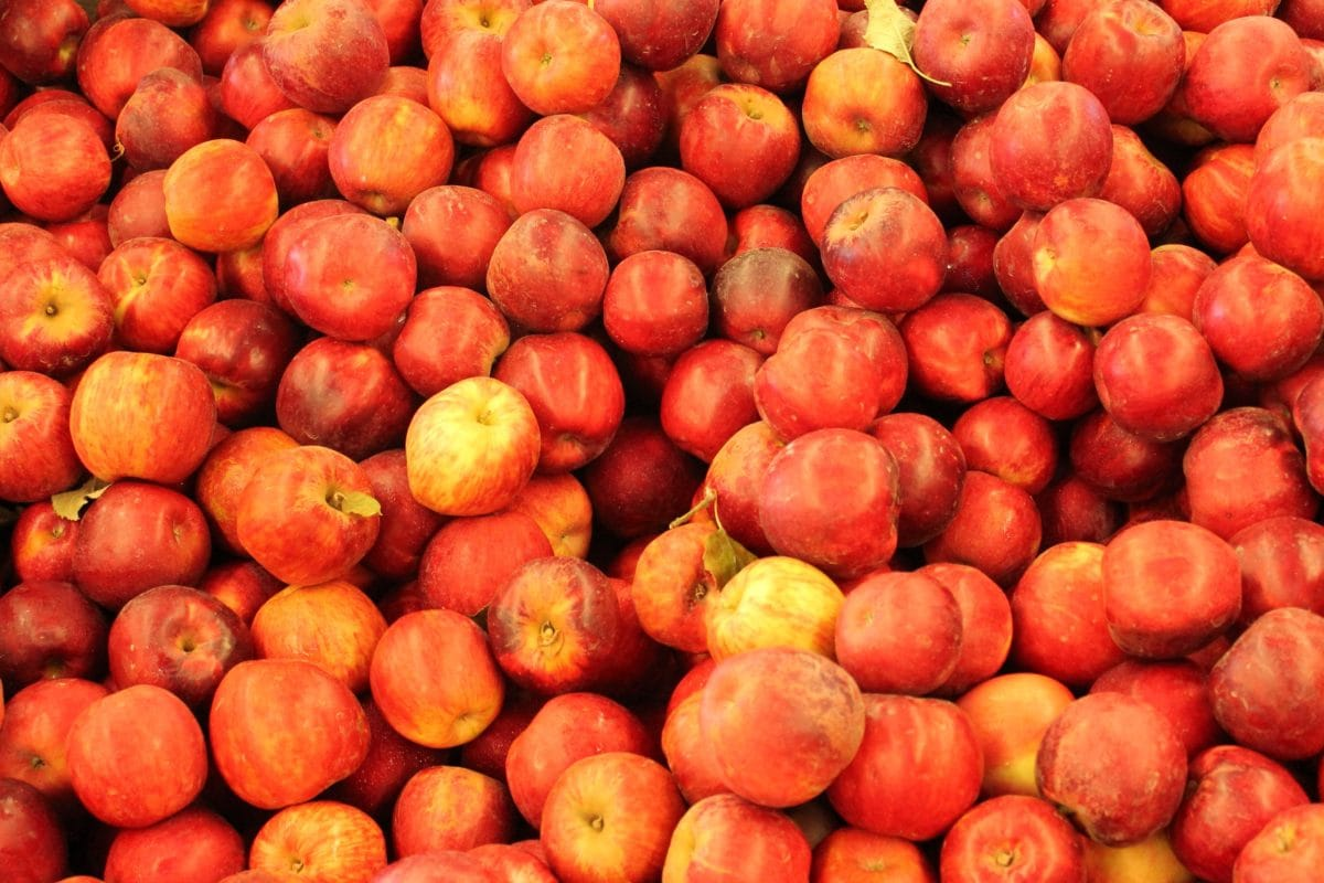 makanan, pasar, nutrisi, buah, persik, Nektarin, manis, organik