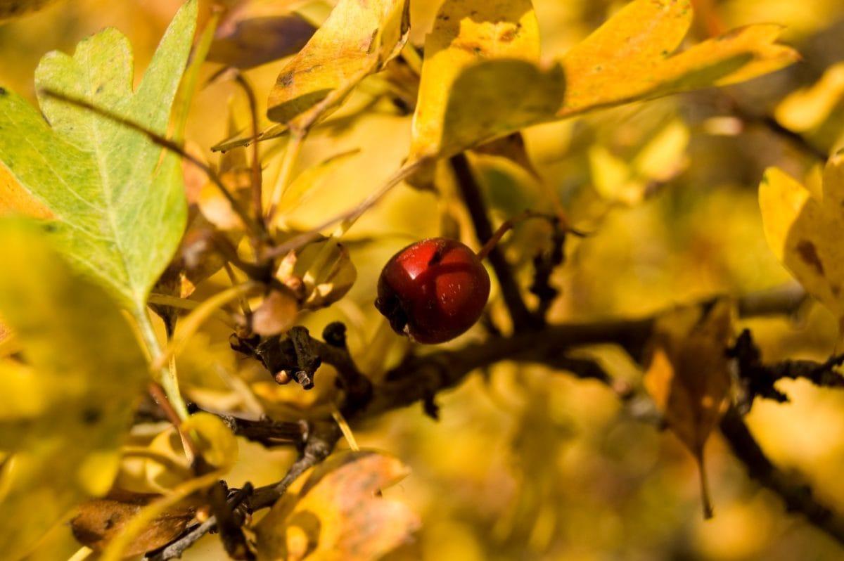 branche, arbre, nature, feuille, plante, automne, feuille sèche