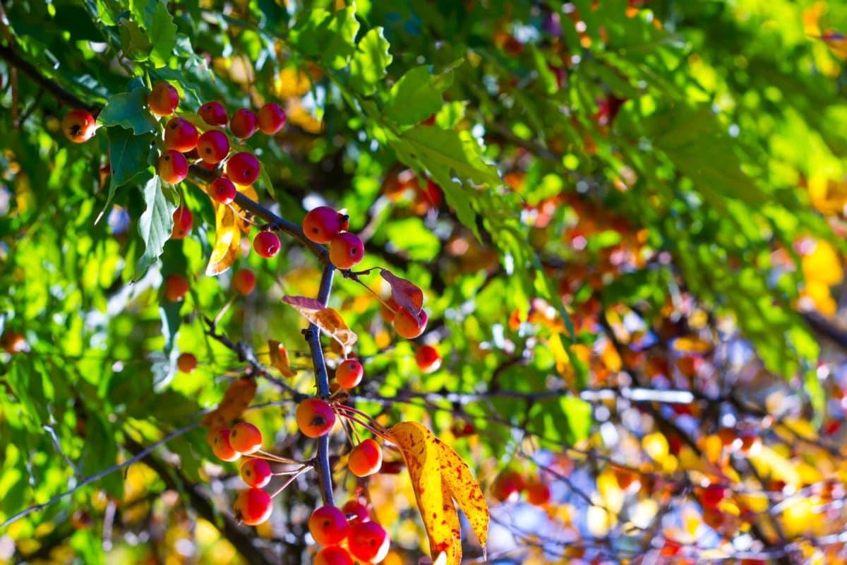 shrub, green leaf, nature, tree, plant, autumn, branch, outdoor, shadow, vegetation