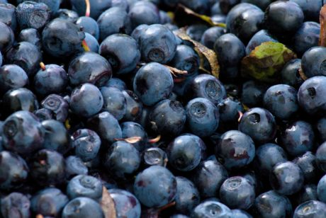 berry, blueberry, fruit, food, sweet, antioxidant, organic