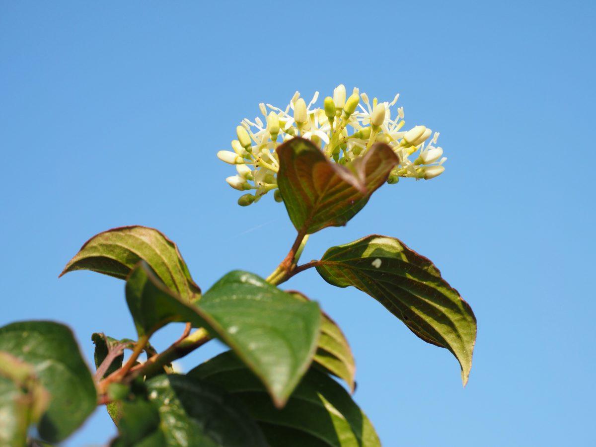 natur, blomst, grønne blad, tre, blå himmel, plante, økologi, biologi