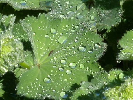 nature, green leaf, rain, dew, raindrop, wet, condensation, moisture, plant