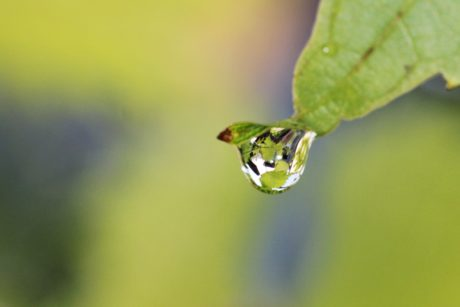 green leaf, rain, wildlife, nature, moisture, wet, biology