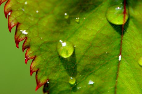 hujan, garden, hijau daun, alam, basah, embun, ekologi, tanaman, air