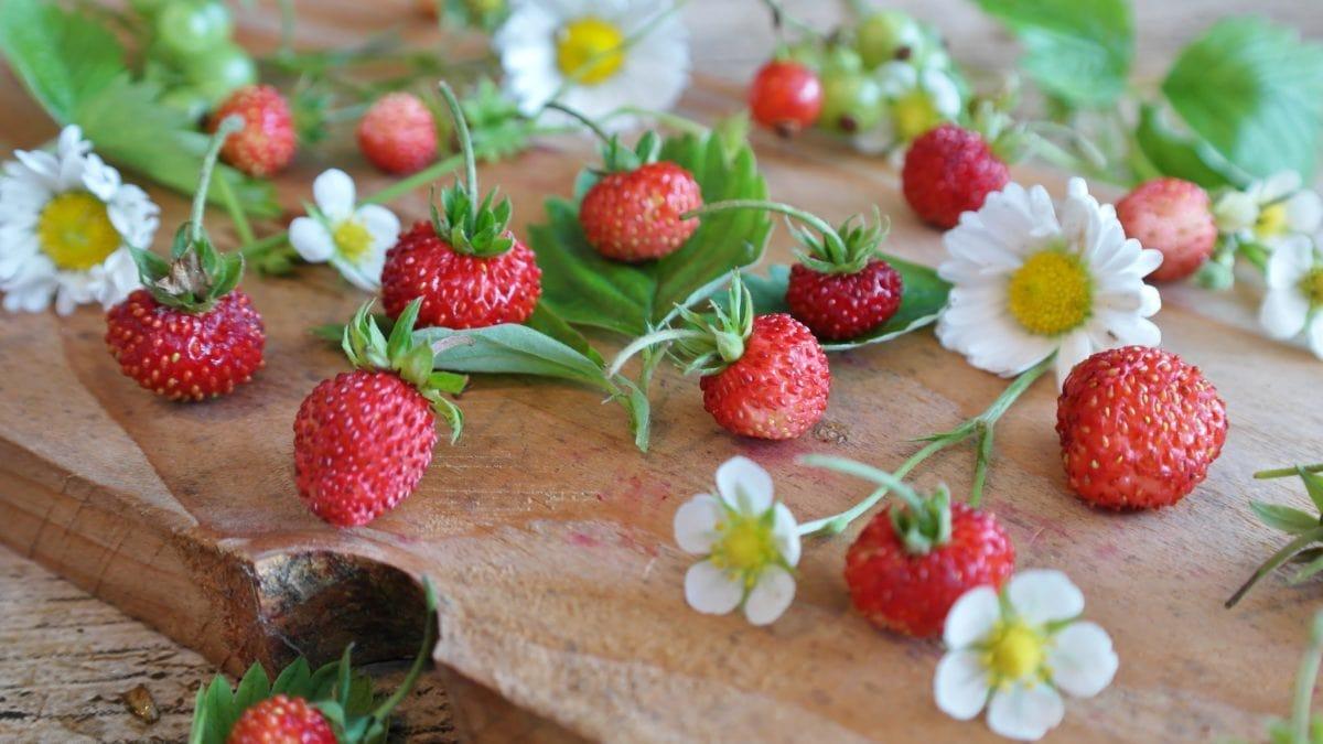 élelmiszer, levél, gyümölcs, finom, édes, bogyó, eper, virág