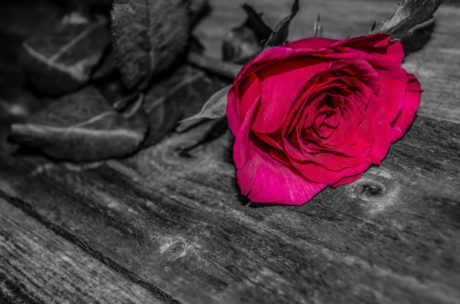 photomontage, monochrome, red flower, rose, plank, shadow