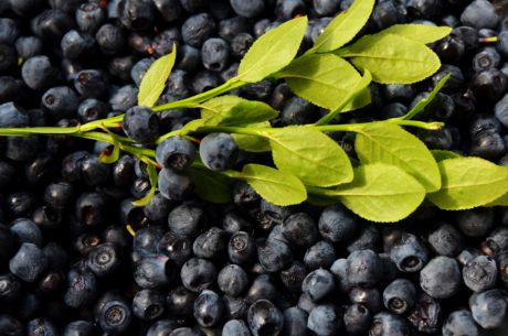 food, fruit, berry, nature, blueberry, leaf, sweet