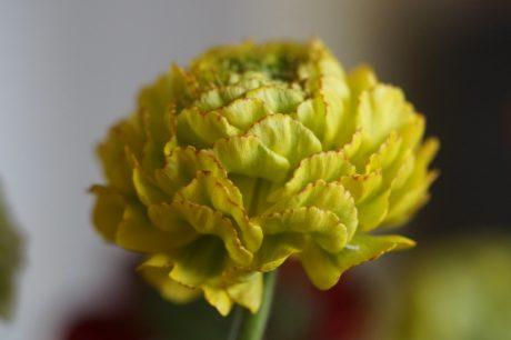 zöld virág, természet, levél, Herb, növény, virág, virágos