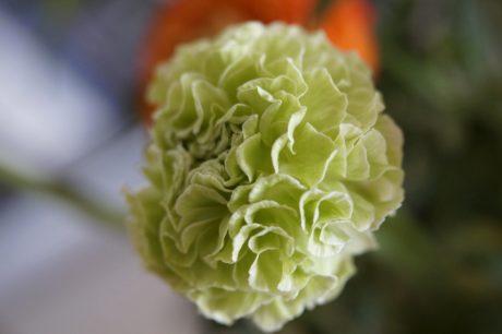 nature, feuille, fleur verte, herbe, plante, ombre