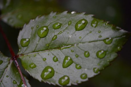 rugiada, foglia, ambiente, pioggia, natura, ombra, tenebre, pianta