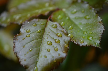 green leaf, dew, nature, rain, plant, water, herb, shadow