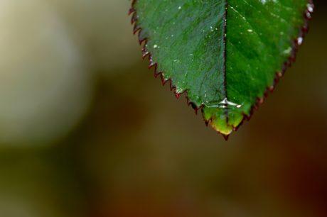 Doğa, yeşil yaprak, yağmur, ağaç, bitki