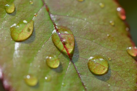 rugiada, bagnato, gocciolina, foglia verde, giardino, liquido, umidità, pioggia, natura