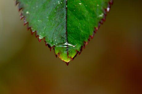 regndråbe, natur, blade, plante, økologi, dagslys, detalje
