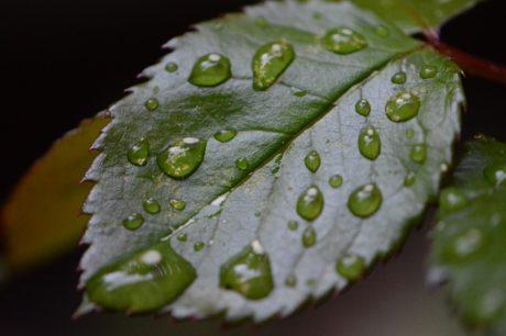 Feuchtigkeit, grünes Blatt, nass, Tau, Regen, Natur, Tröpfchen, Pflanze, Wasser