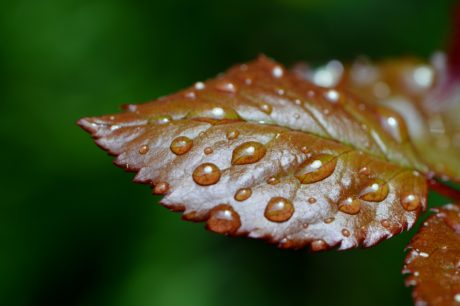 green leaf, rain, nature, detail, outdoor