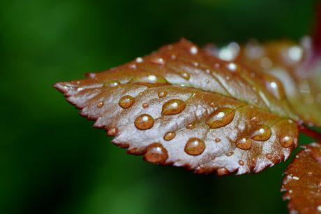 yeşil yaprak, yağmur, Doğa, detay, açık