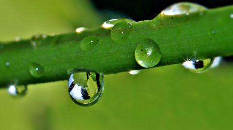 Tröpfchen, Regen, Tau, Natur, grünes Blatt, Organismus