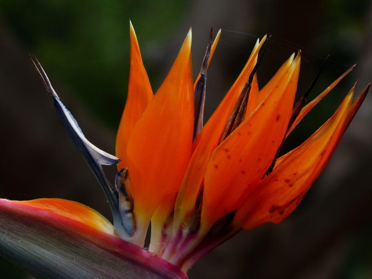 червено цвете, природа, растение, венчелистче, сянка, цвят, Градина, разцвет, лято