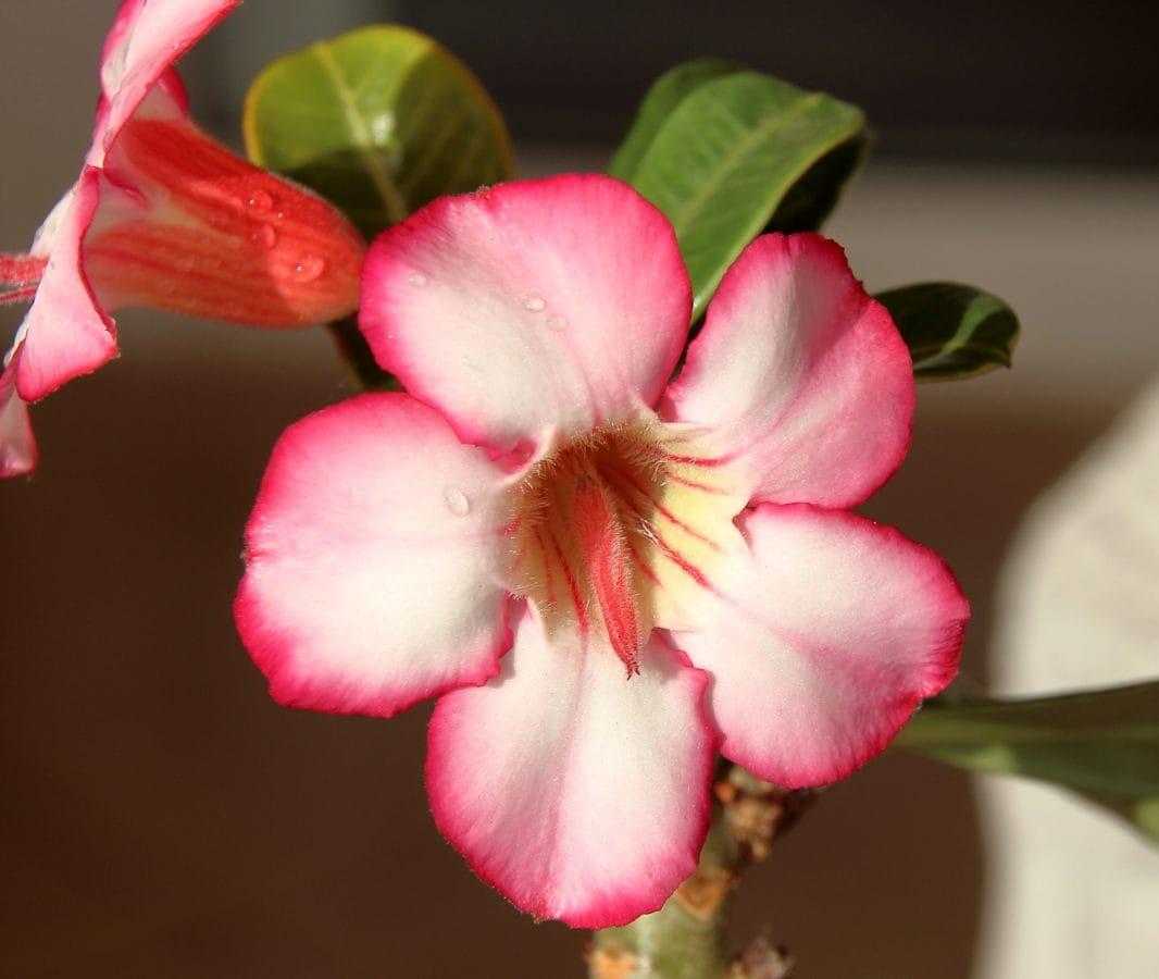 ogród, liść, natura, Płatek, kwiat, słupek, zielony liść, roślina