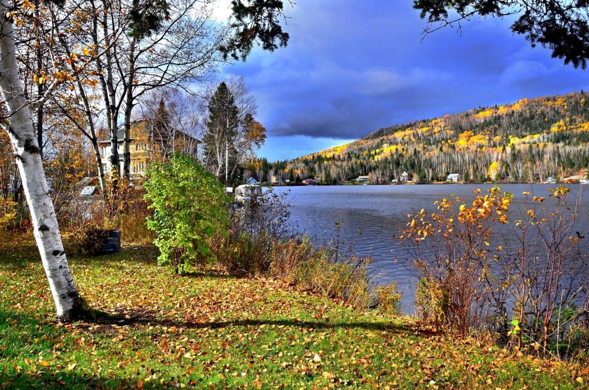 madeira, árvore, natureza, paisagem, floresta, lago, água