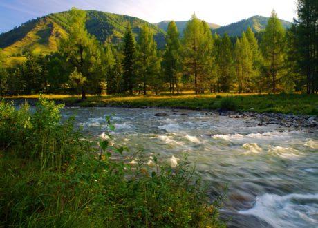 Mountain River, lemn, arbore, natura, peisaj, apă