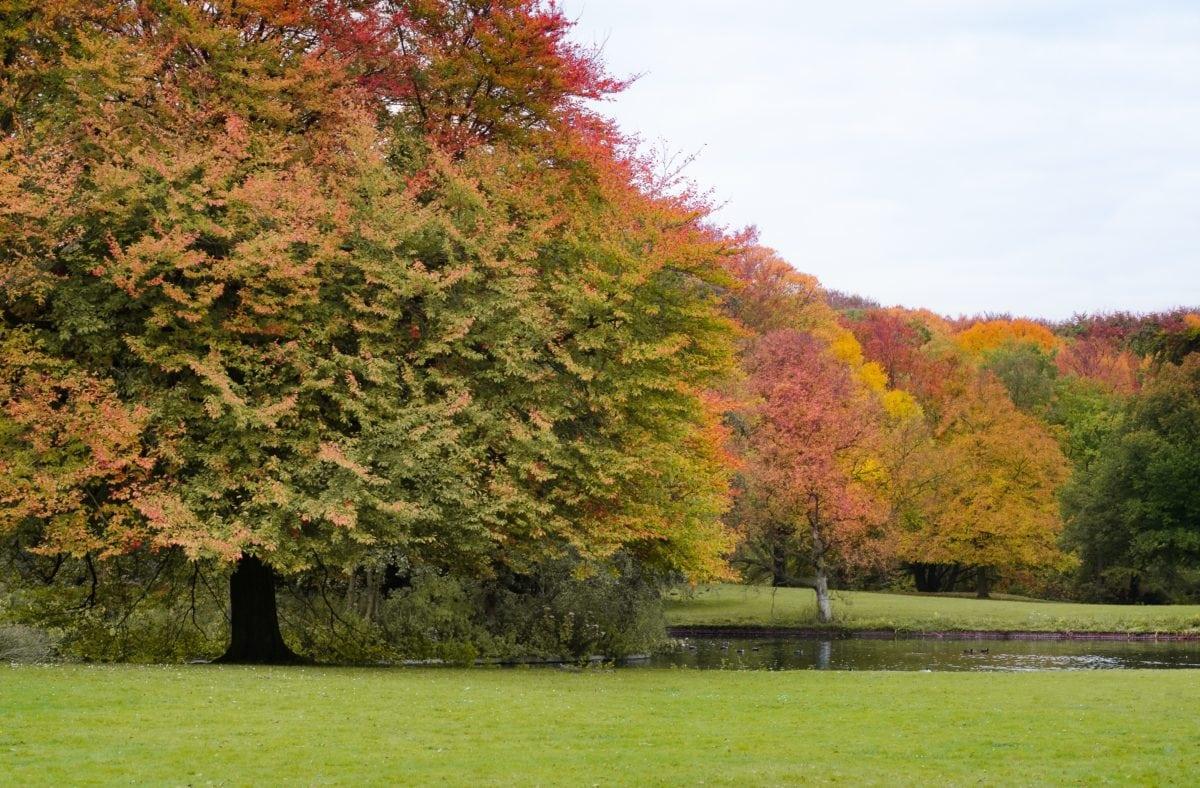 ไม้, ต้นไม้, ภูมิทัศน์, ใบ, ธรรมชาติ