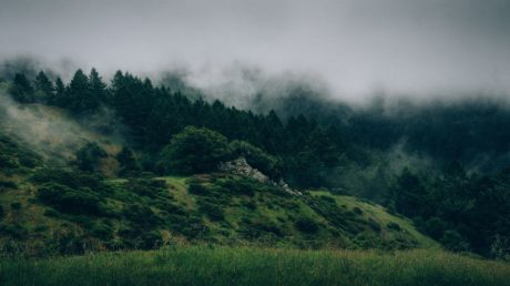 sky, landscape, fog, nature, mountain, tree, forest, grass