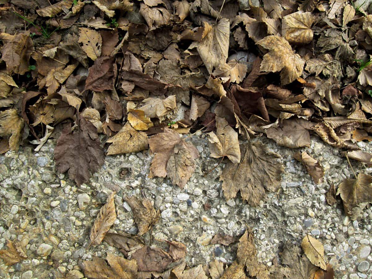 foglia asciutta, struttura, foglia marrone, natura, asfalto, terra, outdoor