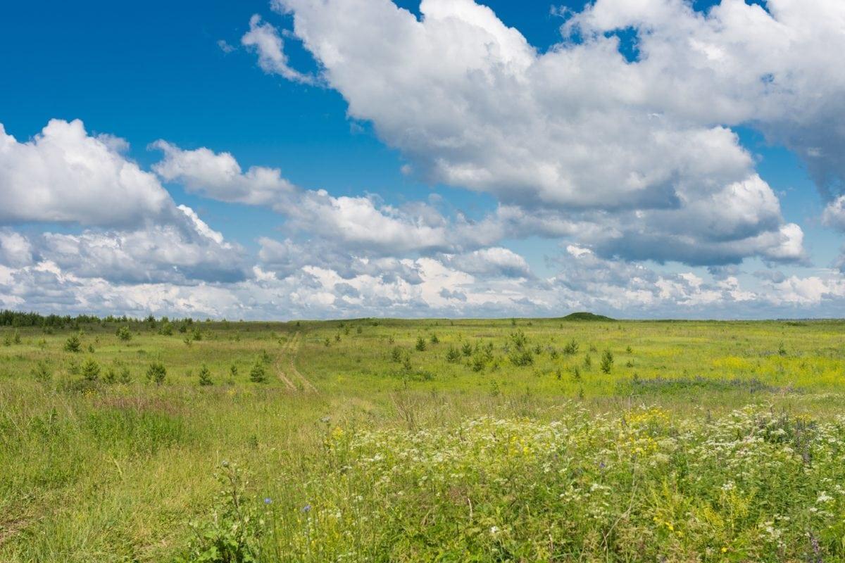 steppe, summer, grass, landscape, nature, field, sky, meadow, land