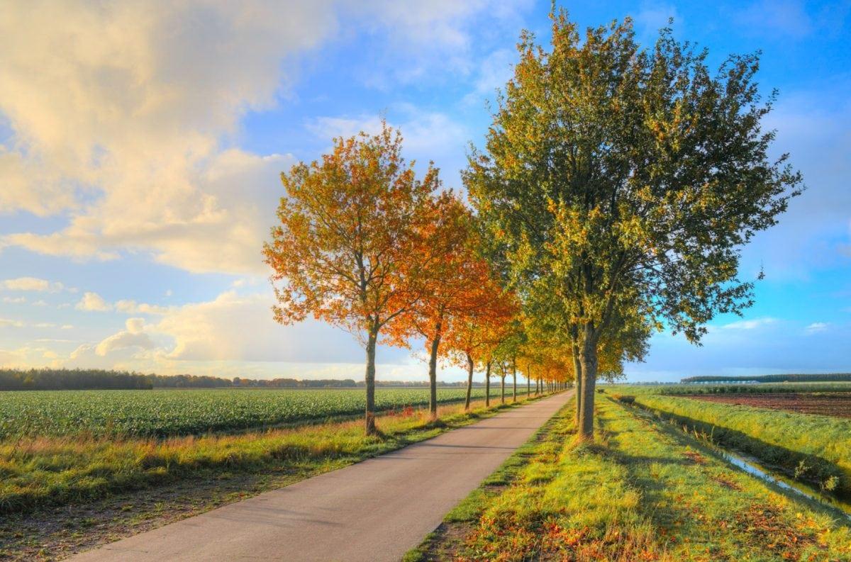 út, fa, nyár, kék ég, vidék, táj, levél, természet, ősz