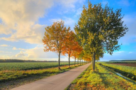 road, tree, summer, blue sky, countryside, landscape, leaf, nature, autumn
