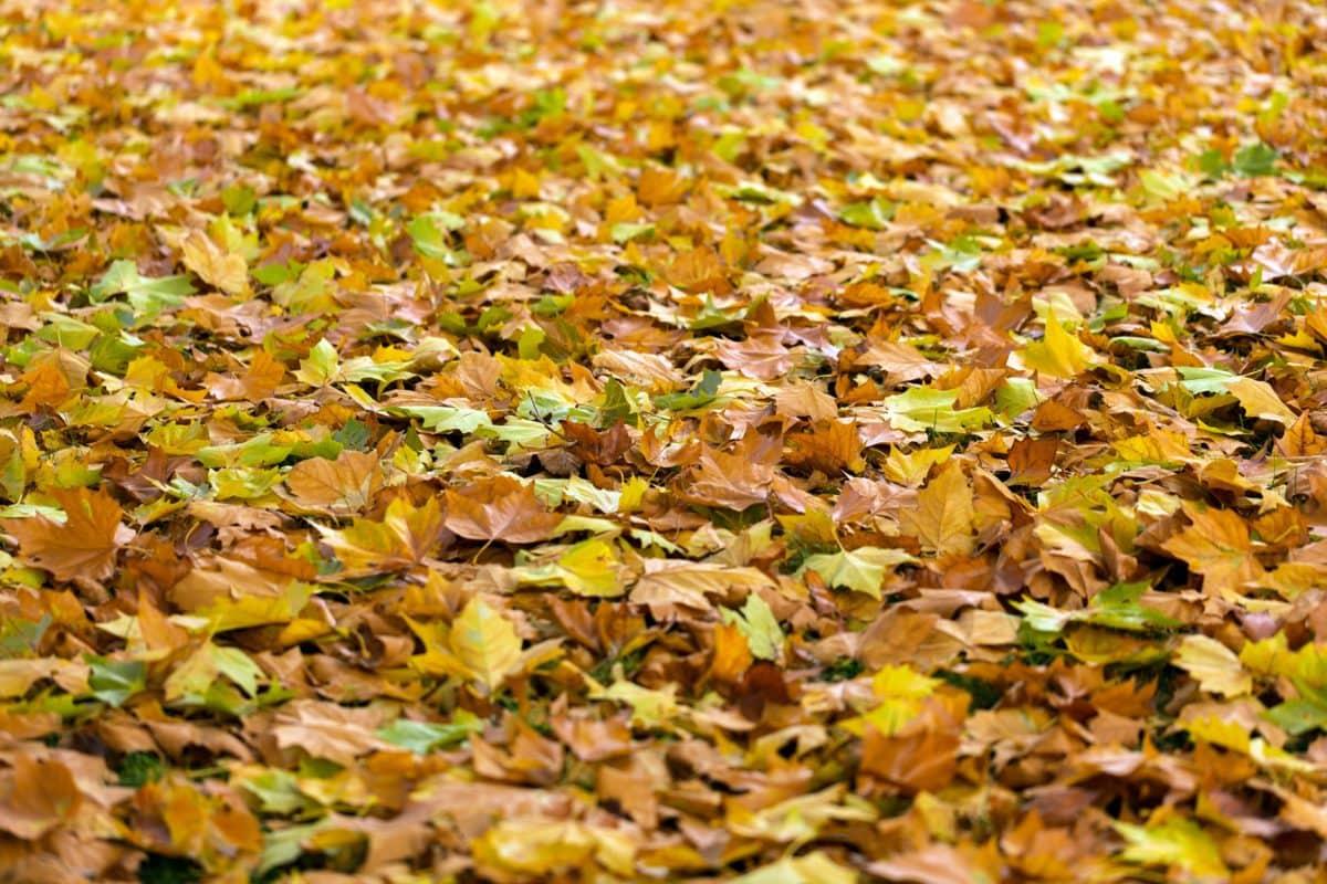 priroda, uzorak, tekstura, list, jesen, suha sezona