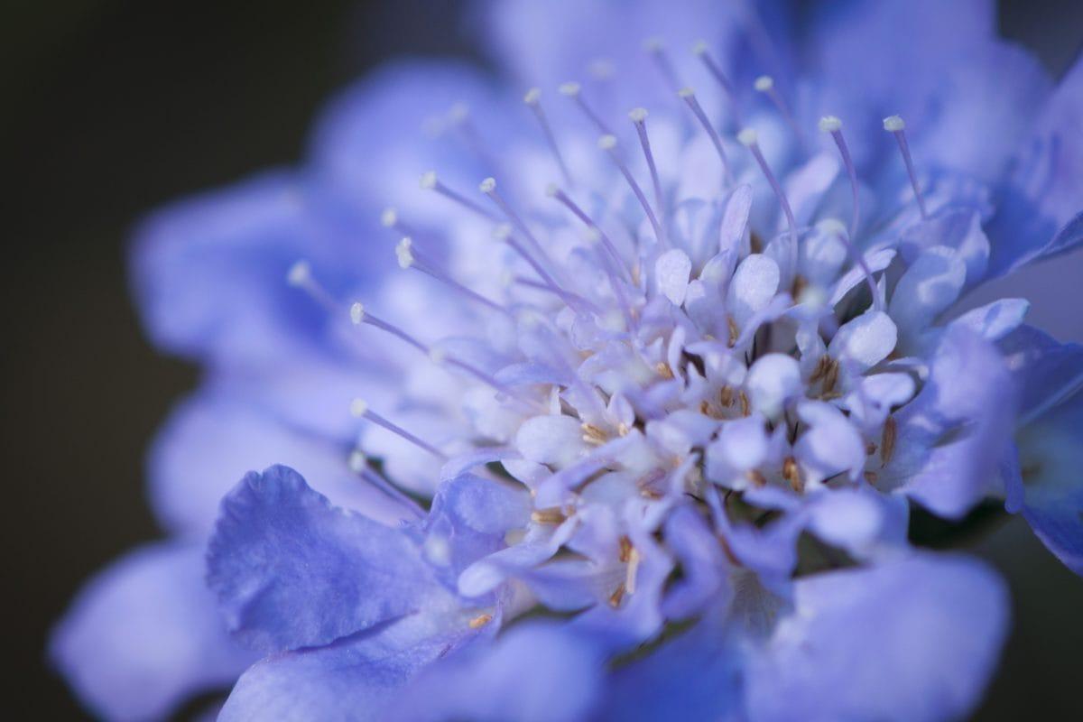 detail, putik, Taman, daun, musim panas, bunga, alam, ramuan, tanaman, daun bunga