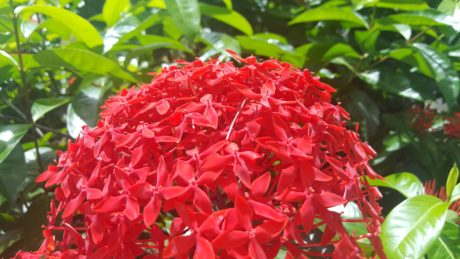 red flower, nature, tree, summer, beautiful, leaf, garden, plant