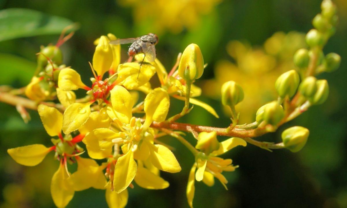 sárga virág, kert, ökológia, levél, nyár, kert, kinti, természet, Herb
