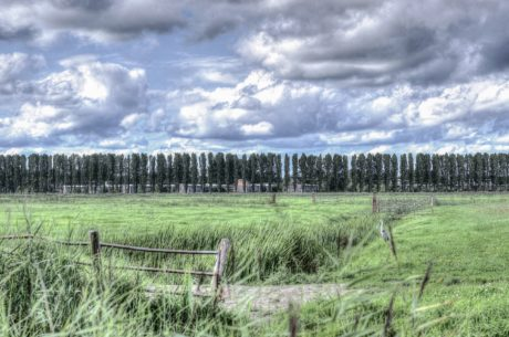 green grass, sky, landscape, nature, fence, field, tree, countryside
