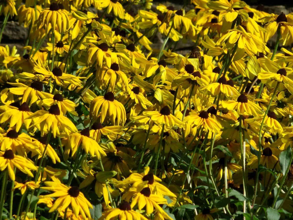 livada, priroda, vrt, Hortikultura, ljeto, cvijet, biljka, biljka