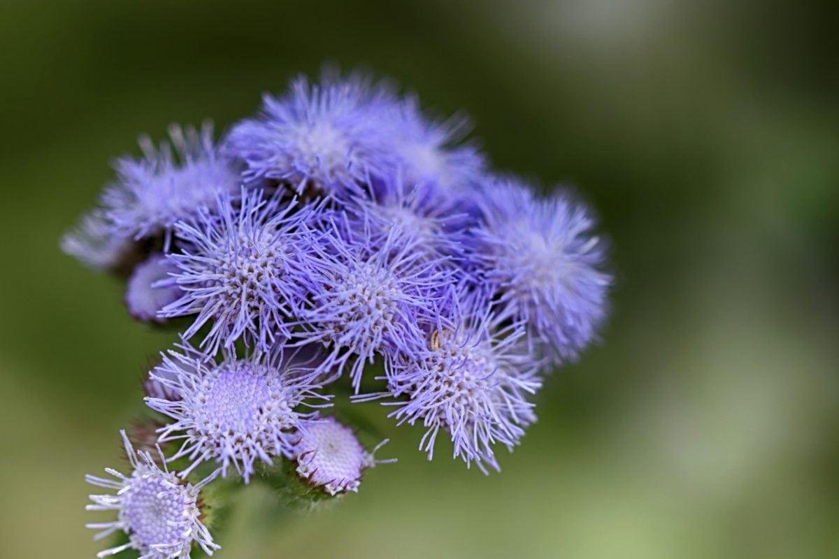 보라색 꽃, 자연, 허브, 꽃잎, 나뭇잎