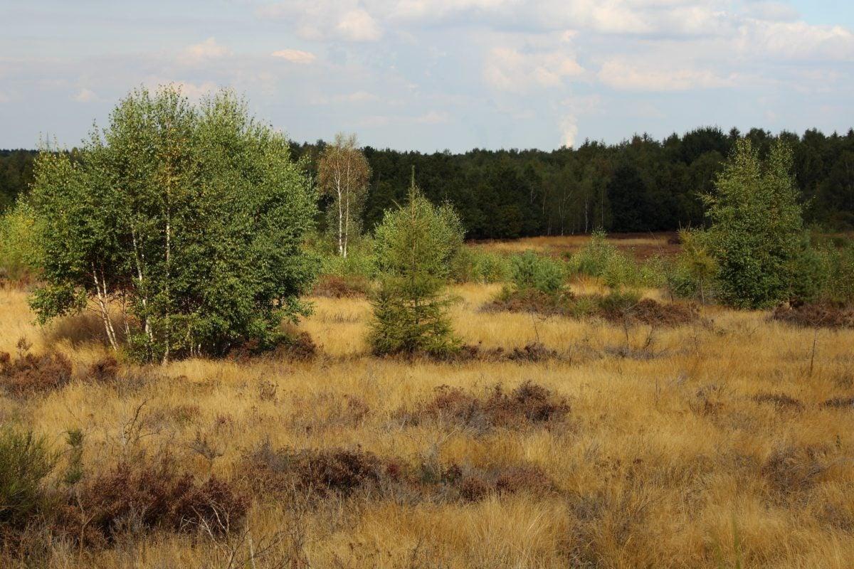 дърво, природа, пейзаж, лабиринт, поле, трева, на открито, небе