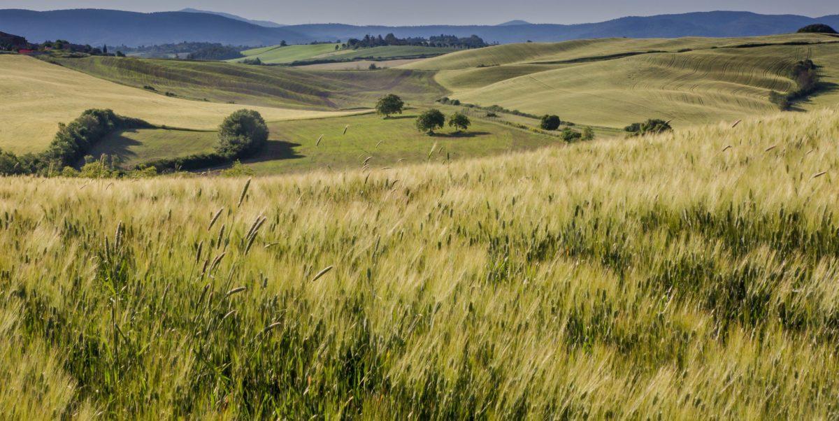 βουνοπλαγιά, χλόη, γεωργία, φύση, τομέας, τοπίο, ουρανός, ύπαιθρος