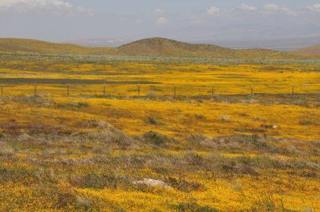 paesaggio, natura, colza, steppa, campo, collina