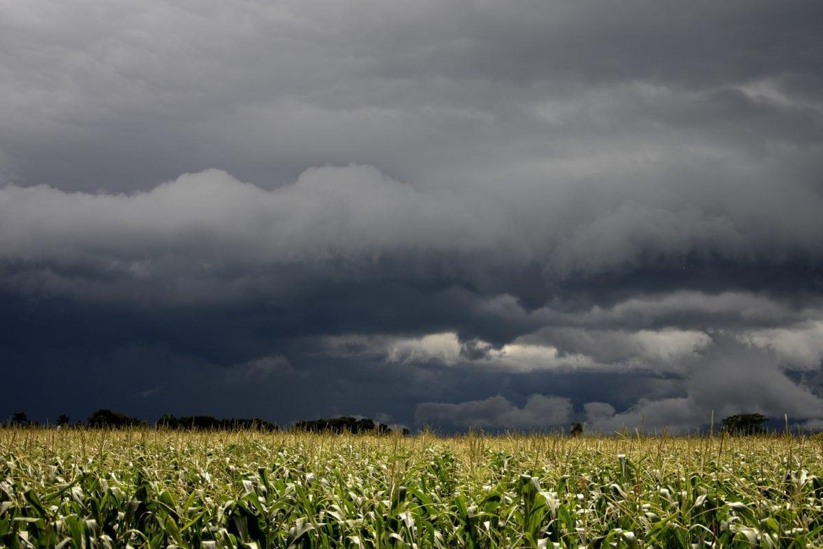 agricoltura, nube, campo, natura, estate, paesaggio, cielo scuro, campo di cereale