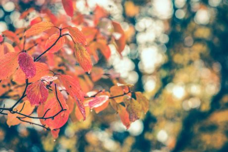 nature, leaf, tree, plant, autumn, branch, forest